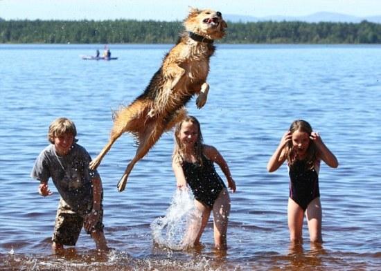 Perierga.gr - Ένας σκύλος για ... τους ολυμπιακούς!