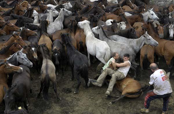 perierga.gr - Άλογα vs ανθρώπων: Ένας παράξενος αγώνας πάλης!
