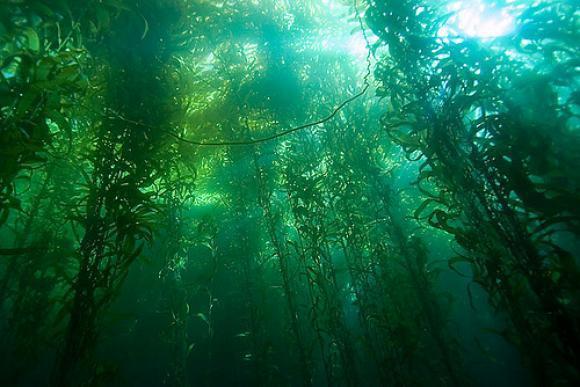 perierga.gr - Τα top 10 ωραιότερα τροπικά δάση του πλανήτη!