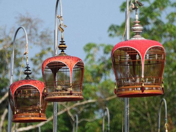 perierga.gr - Διαγωνισμός ωδικών πτηνών!