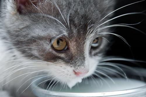 Perierga.gr - Ανθρώπινες τροφές επικίνδυνες για τις γάτες