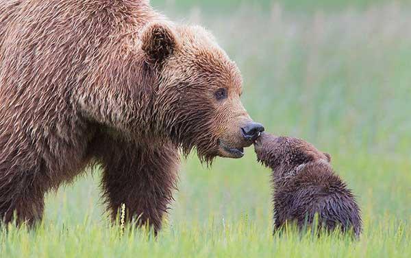 perierga.gr - Τρυφεροί γονείς στο ζωικό βασίλειο!
