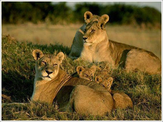 perierga.gr - Τα πιο εργατικά ζώα της φύσης!