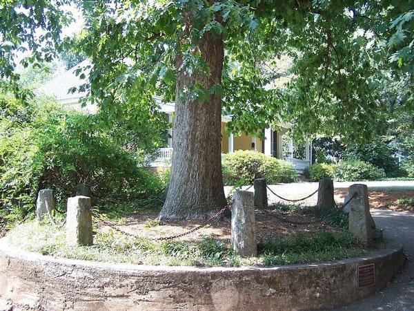 perierga.gr - Το δέντρο που ανήκει στον εαυτό του!
