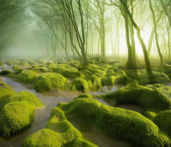 perierga.gr - Πανέμορφα μονοπάτια στη φύση!