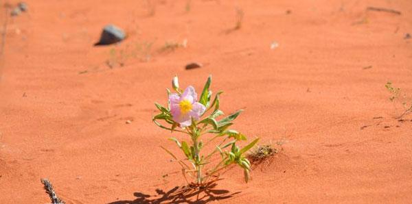 Αποτέλεσμα εικόνας για μοναχικό φυτό στην έρημο