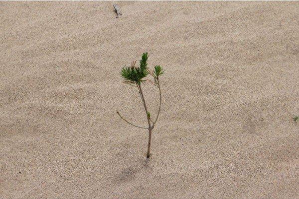 perierga.gr - Η γυναίκα που φυτεύει δέντρα στην μνήμη του γιου της!