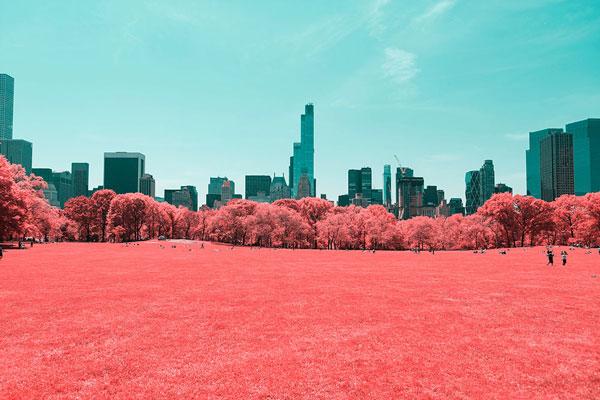 "perierga.gr - ""Κοκκίνισε"" το Central Park στη Νέα Υόρκη!"