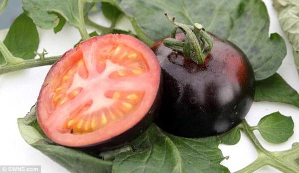 perierga.gr - Σε πόσα χρώματα κυκλοφορεί η ντομάτα;