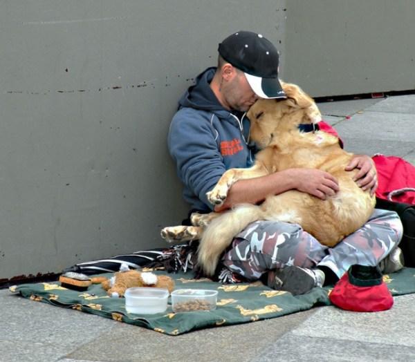 perierga.gr - Πιστοί σκύλοι έμειναν με τα αφεντικά τους στα δύσκολα!
