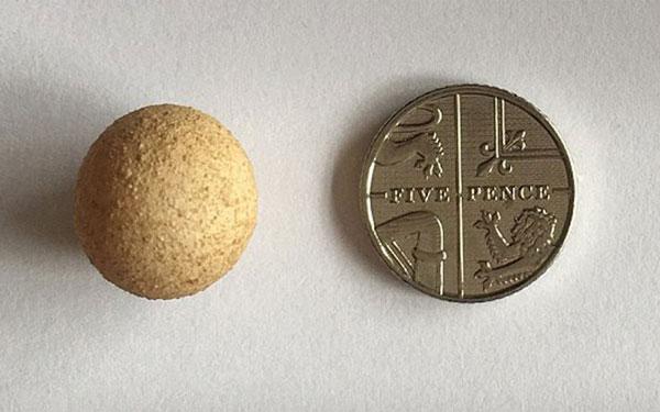 perierga.gr - Πόσο μικρό είναι το μικρότερο αυγό στον κόσμο!