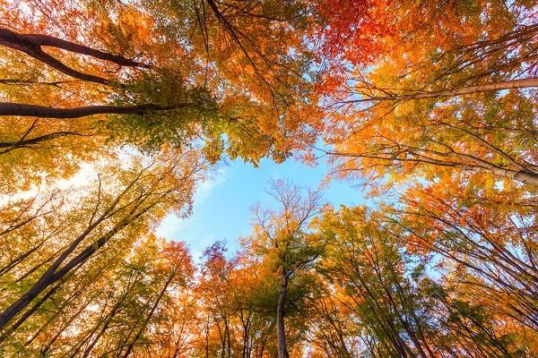 perierga.gr - Γιατί τα φύλλα αλλάζουν χρώμα το φθινόπωρο;