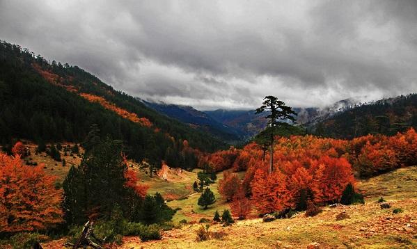 perierga.gr - Υπέροχα φθινοπωρινά τοπία από την Ελλάδα!