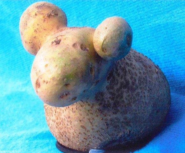perierga.gr - Φρούτα & λαχανικά σε παράδοξα σχήματα!