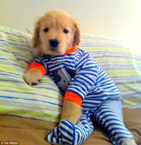perierga.gr - Σκυλιά φοράνε πιτζάμες και είναι αξιολάτρευτα!