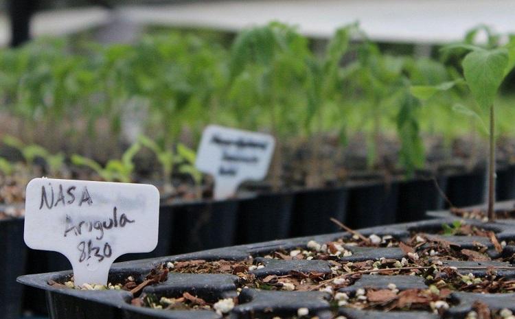 "perierga.gr - Η NASA αναπτύσσει ""αρειανούς κήπους""!"