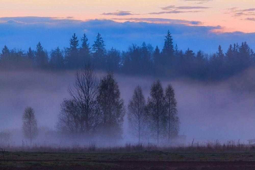 perierga.gr - Το τελευταίο αρχέγονο δάσος της Ευρώπης!