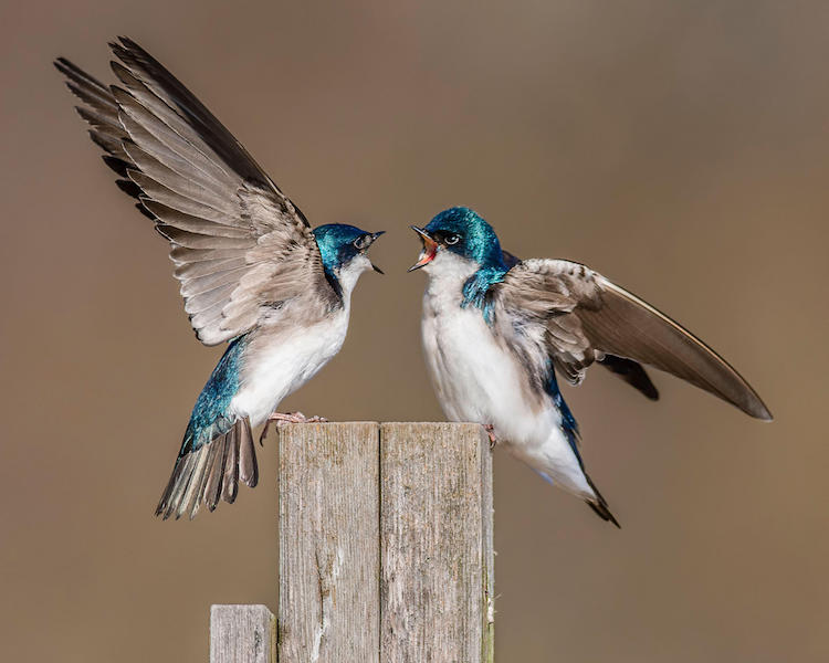 perierga.gr - Μαγευτική ομορφιά στον κόσμο των πτηνών!