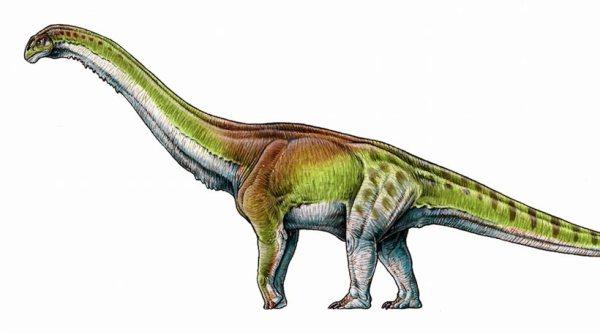 perierga.gr - Ο μεγαλύτερος δεινόσαυρος που έζησε ποτέ είχε μήκος 37 μέτρων!