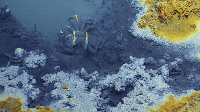 perierga.gr - 10 τοξικά σώματα νερού