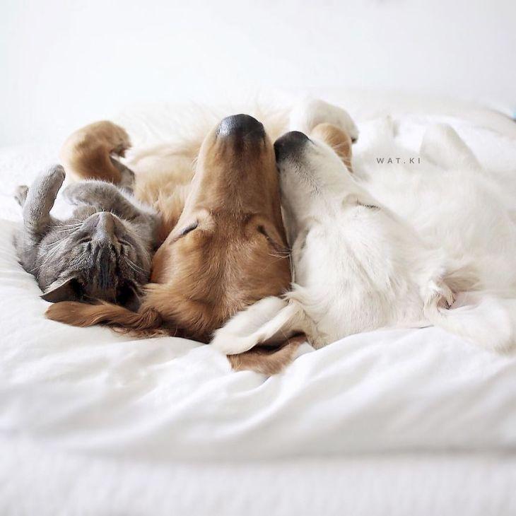 perierga.gr - Δύο σκύλοι και μια γάτα σε μια υπέροχη συνύπαρξη!