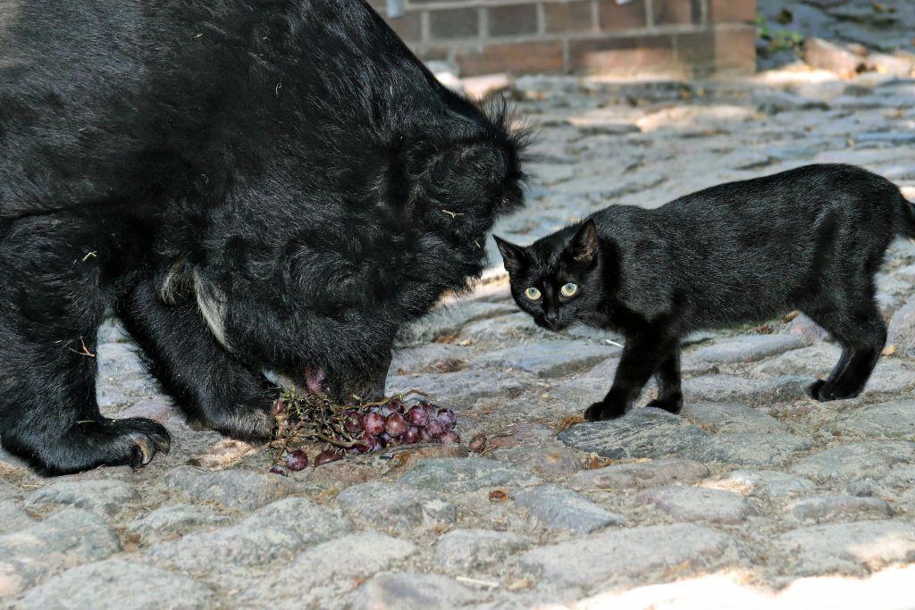 muschi-mauschen-zoo-berlin