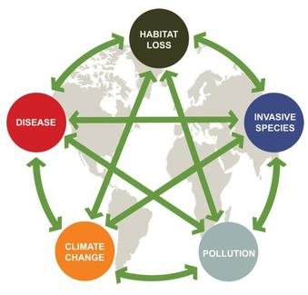 global-climatic-change-atmosphere-CO2-nitrogene-biogeochemical-cycles-anthropogenic-Biological-invasions-pollution-environment