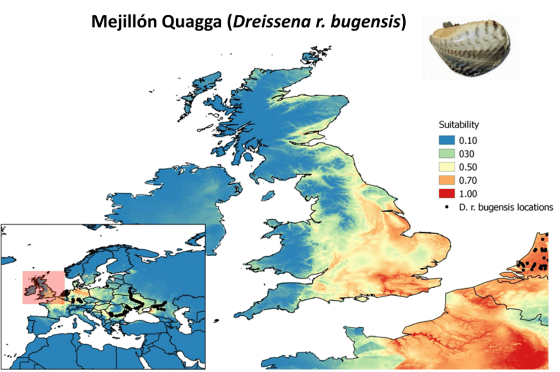 Distribution-models-populations-invasive-species-biological-invasions-quagga-mussel-predictions-caution-prevention