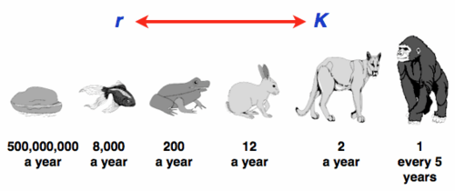 sexual-reproduction-reproductive-strategies-k-r-ideal-invader-invasive-alien-species-invasive-success-hypothesis