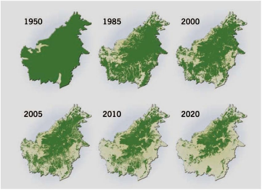 deforestation-climate-change-peatland-fire-extintion-orangutans-palm-oil-kernel-elaeis-guineensis-environment-rainforest-biodiversity-indonesia-malaysia-economy-production