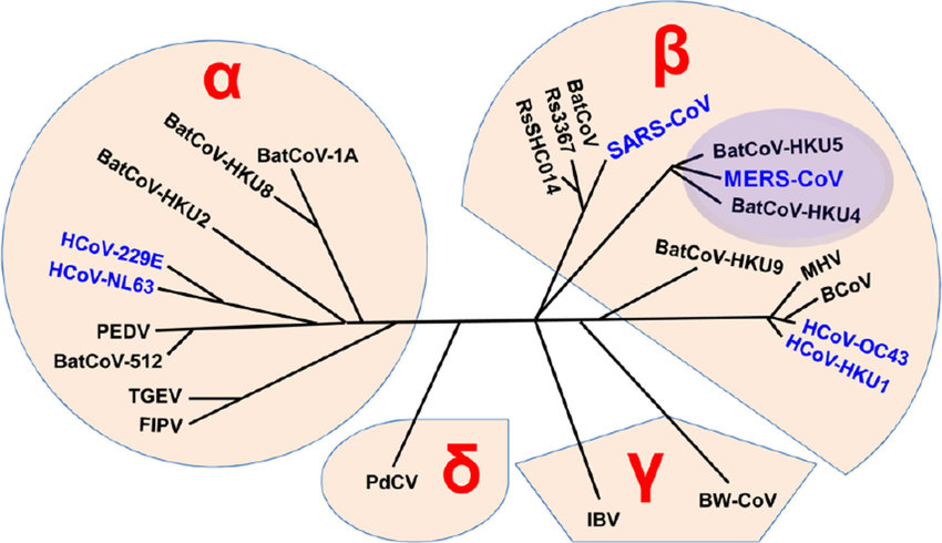 coronavirus-covid19-sars-cov-2020-virus-virologia-epidemia-pandemia-mundial-medicina-china-wuhan-mers-gripe-resfriado