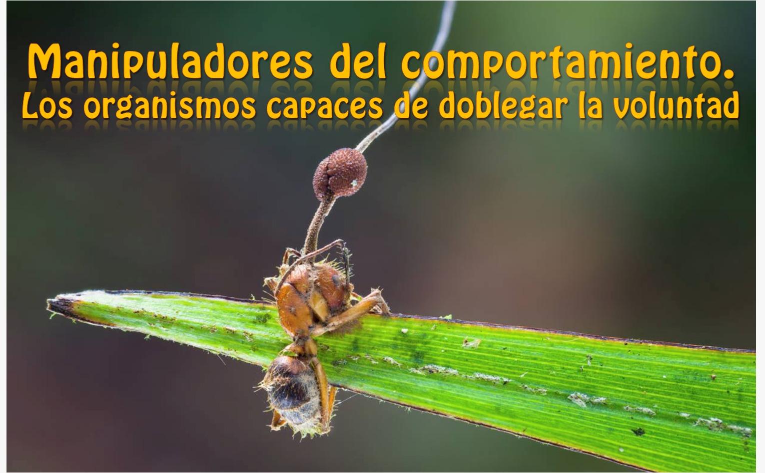 manipuladores del comportamiento-hormigas-control mental- mk ultra- hongos-parasitismo-biologia-gusanos