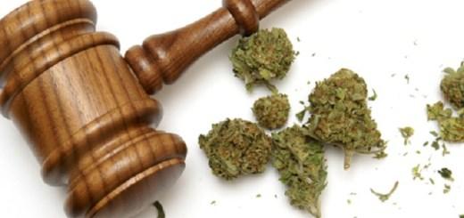 drogas leyes cannabis