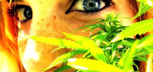 joves cannabis
