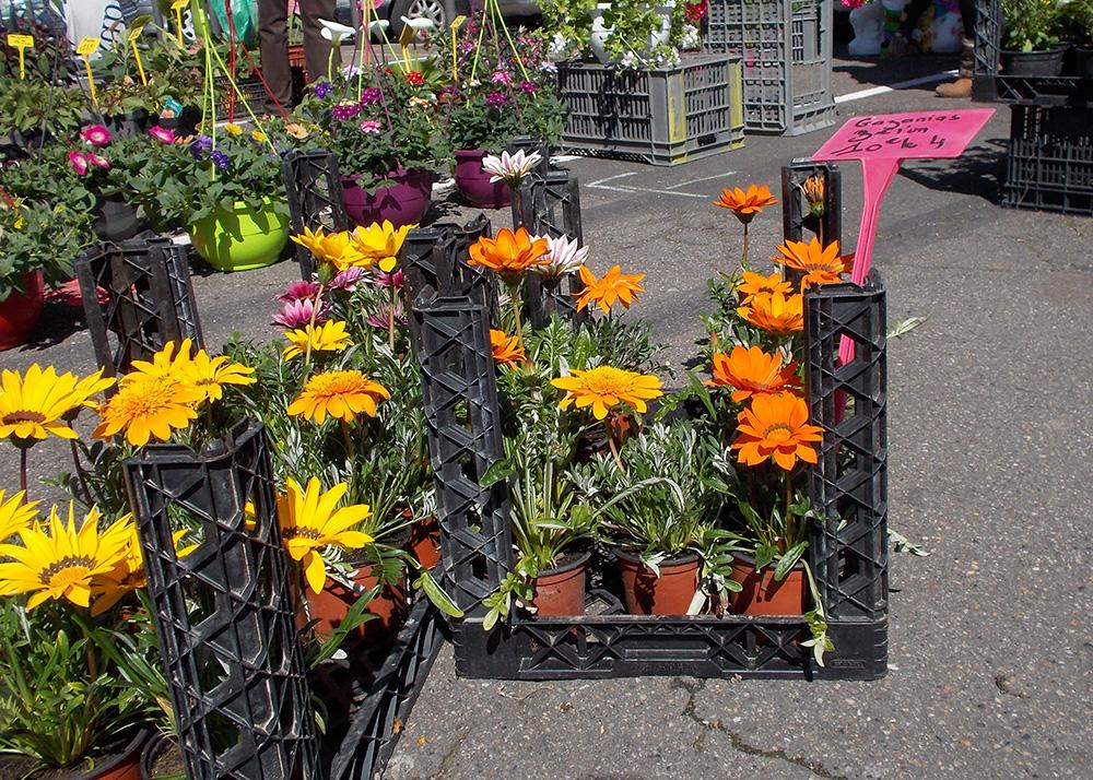 Marché aux plantes et aux fleurs - 10 avril 2016 à Bergerac
