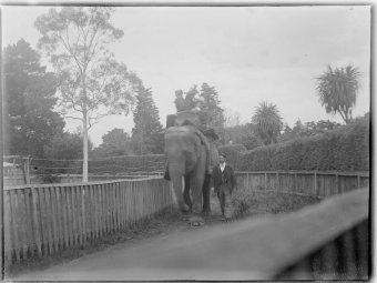 Elephant in a zoo enclosure, ca. 1890-ca. 1915 (www.slv.vic.gov.au)