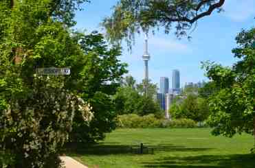 Toronto skyline through trees