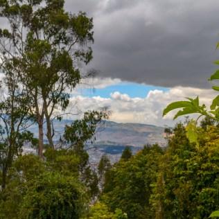 treetops above Bogota