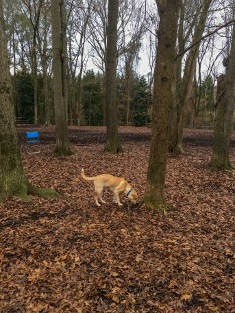 Gimli at the dog park