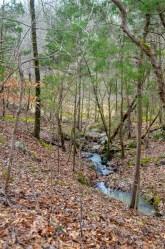 stream in Eno River State Park