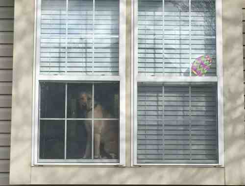 putting Easter eggs in the window gives kids something to hunt for