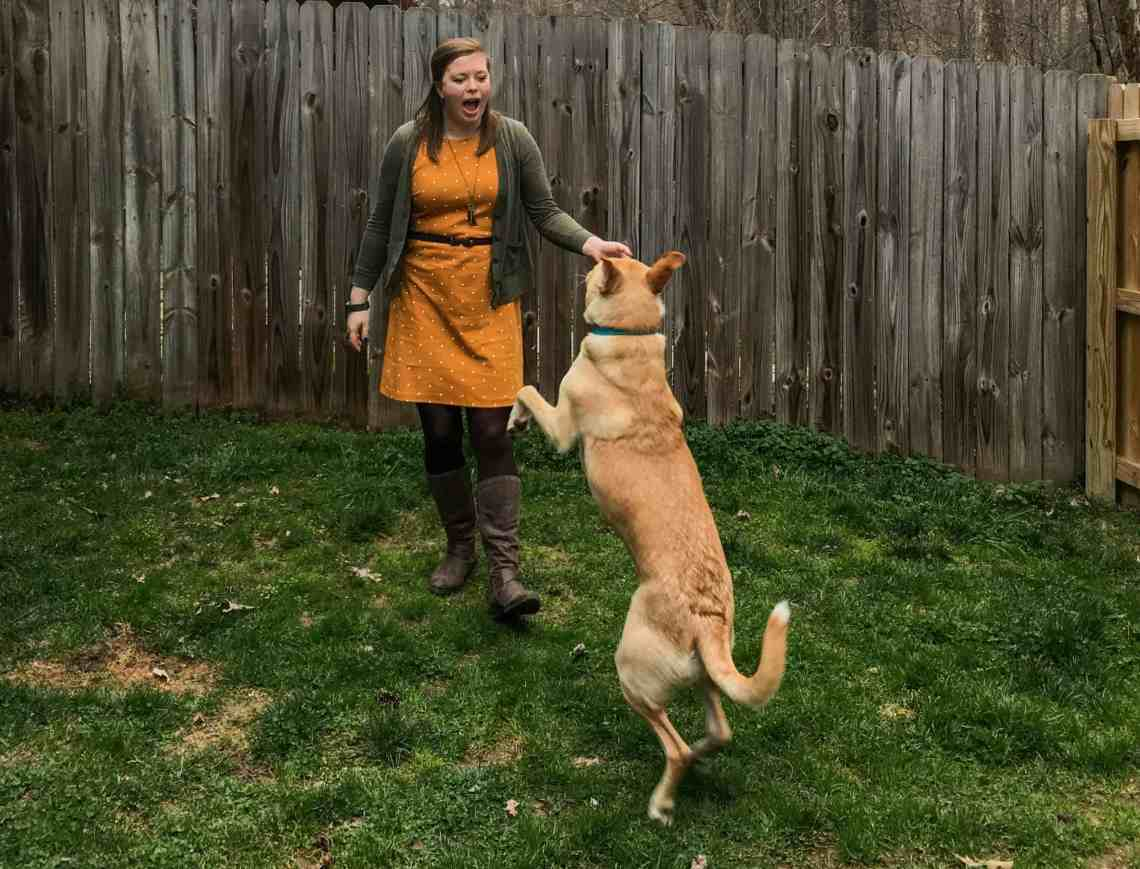 Dog care tips to keep your dog happy & healthy.