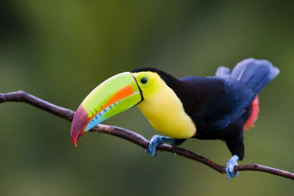 actualizado-listado-aves