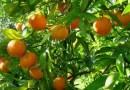 Ψήφισμα δήμου Ηγουμενίτσας για την στήριξη των παραγωγών