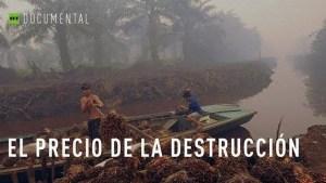 Aceite de palma: El precio de la destrucción