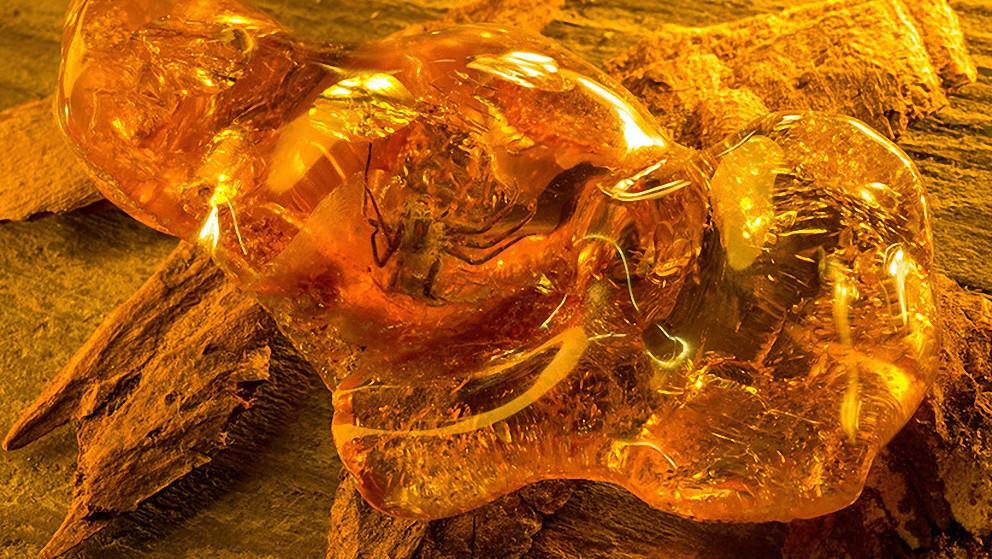 Hallan un caracol atrapado vivo en ámbar hace 99 millones de años