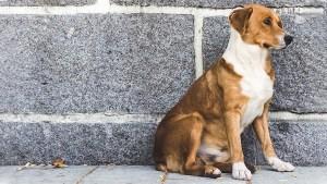 Un perro guía a una ambulancia hacia el lugar donde su dueño se había desmayado
