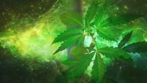 La OMS recomienda quitar el cannabis de la lista de drogas peligrosas