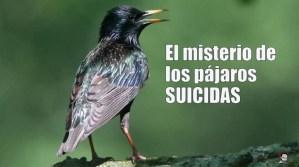 El misterio de los pájaros suicida de Ecuador