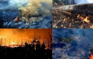 Los incendios provocados en el Amazonas